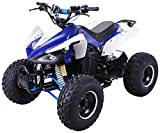 Kinder Elektro Quad S-14 Speedy 1000 Watt Miniquad Kinderfahrzeug Midiquad (Blau/Weiß)